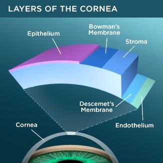 layers-cornea